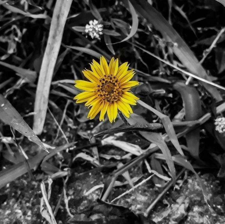 photo, flower - vanzbarbosa | ello