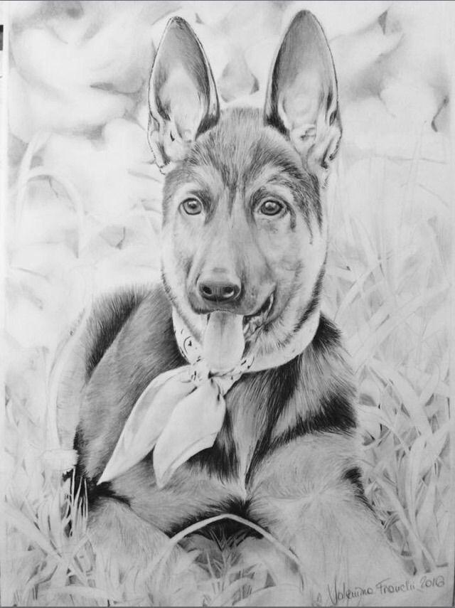 Dog - Charcoal pen a4 paper - Puppy - valentinafranchi92 | ello