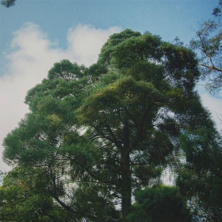 Soul trip - tree, color, riazhassan - riazhassan | ello