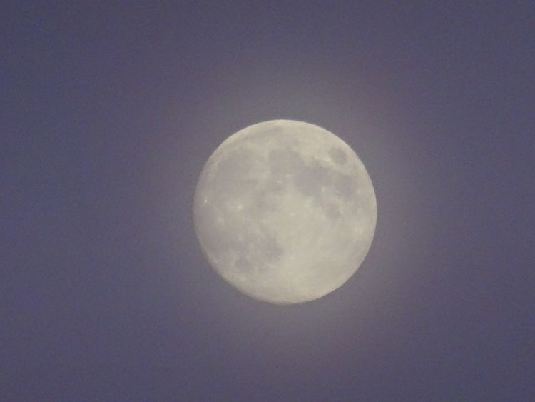 watching, moon, FULLMOON - elsevandelen | ello