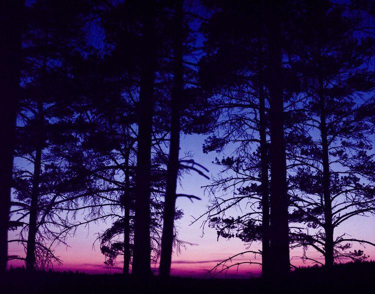 Swedish forest Camera: Mamiya R - bo47 | ello