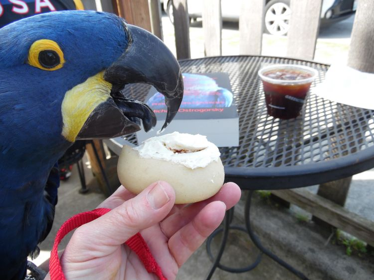 Perfect Sunday Morning, Parrot - michaelostrogorsky | ello