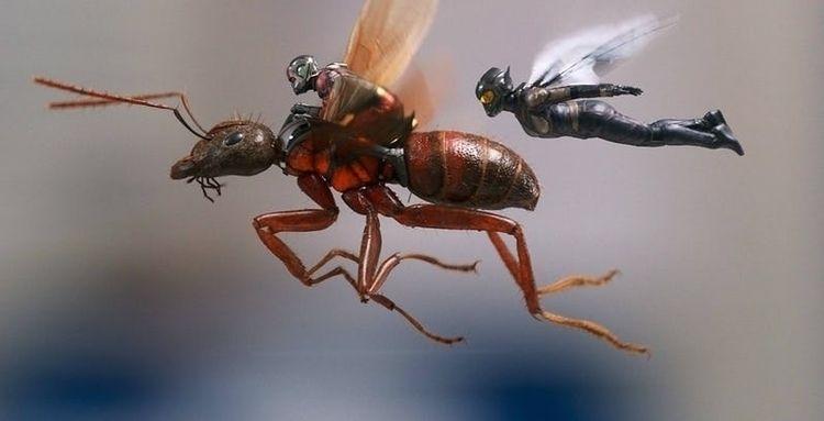 AntMan Wasp faster, funnier pre - vicsimon | ello