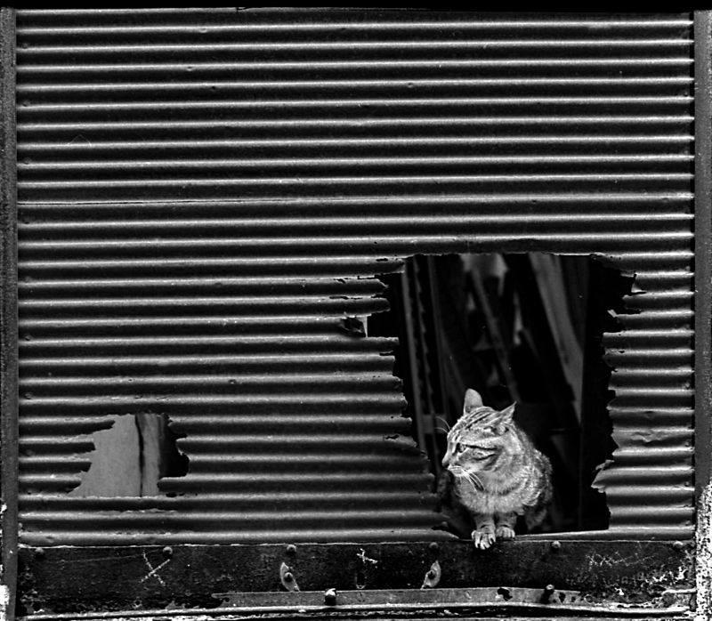 blackandwhite, pentax, streetphotography - andrewld   ello