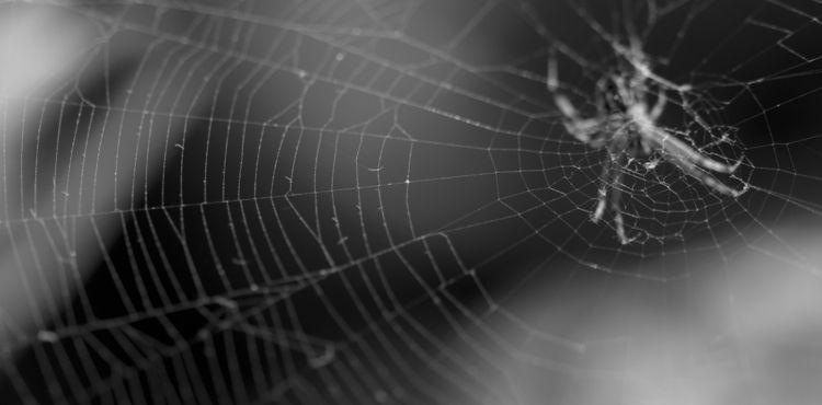 photography, spider, web, blackandwhite - shjizadurden | ello