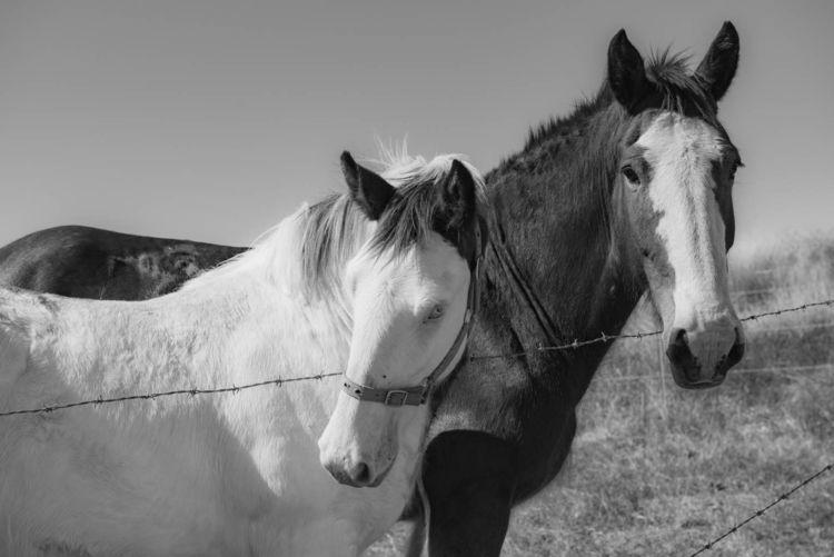 horses - animals, nature, australia - daphot | ello