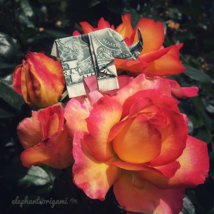 elephant stop smell roses - origami - elephantorigami | ello