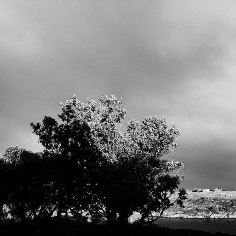 Tree - tree, sea, black, white, clouds - loskarf | ello