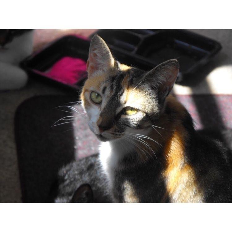 Vera:ear_of_rice - cat, cats, home - fallenkittie | ello