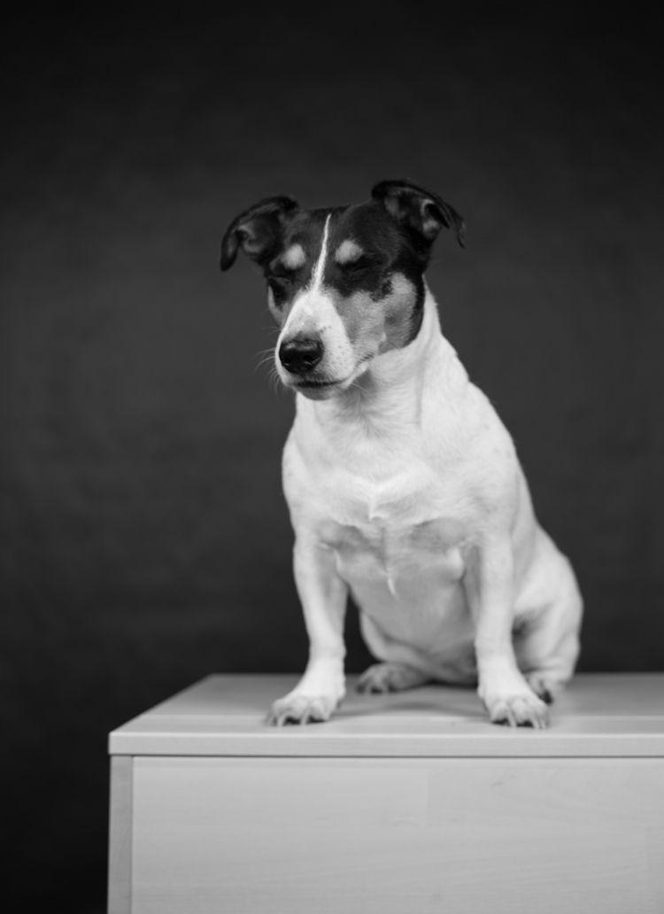 meditative dog, picture filters - georgie_pauwels | ello