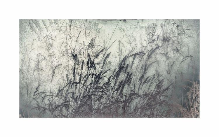 Grasses Series - LFI, leica, leicahuawei - alanclarkephotography | ello