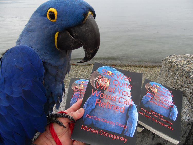 reading weekend? Hyacinth Macaw - michaelostrogorsky | ello