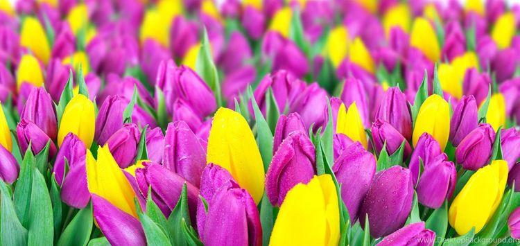 Daily Tulip – News World Monday - robert-mcangus | ello