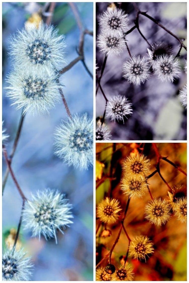 88 Degree Wishes 1 - photography - saysaphotography | ello