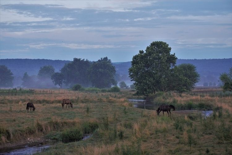 5:45 Fairfield, Pa - horses, stream - jymmm3 | ello