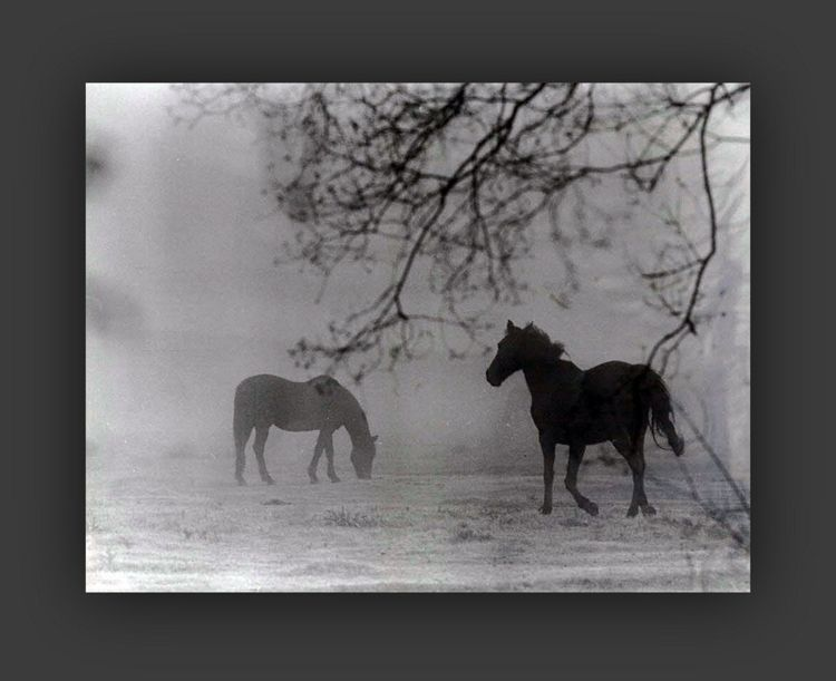 monochrome, horse - voiceofsf   ello