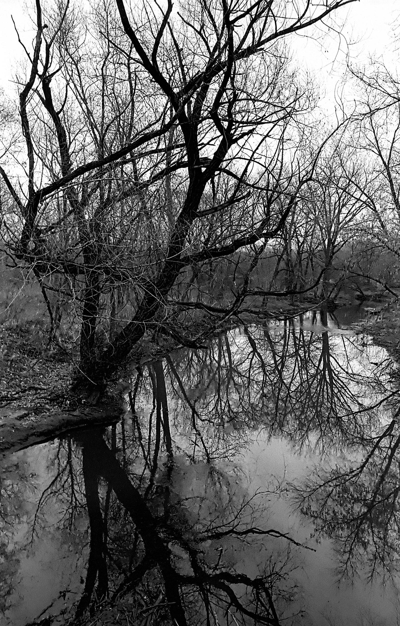 Lost woods - capnvideo | ello