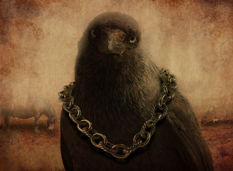 Bird boss - llamnuds, bird, bigbird - shaundunmall | ello