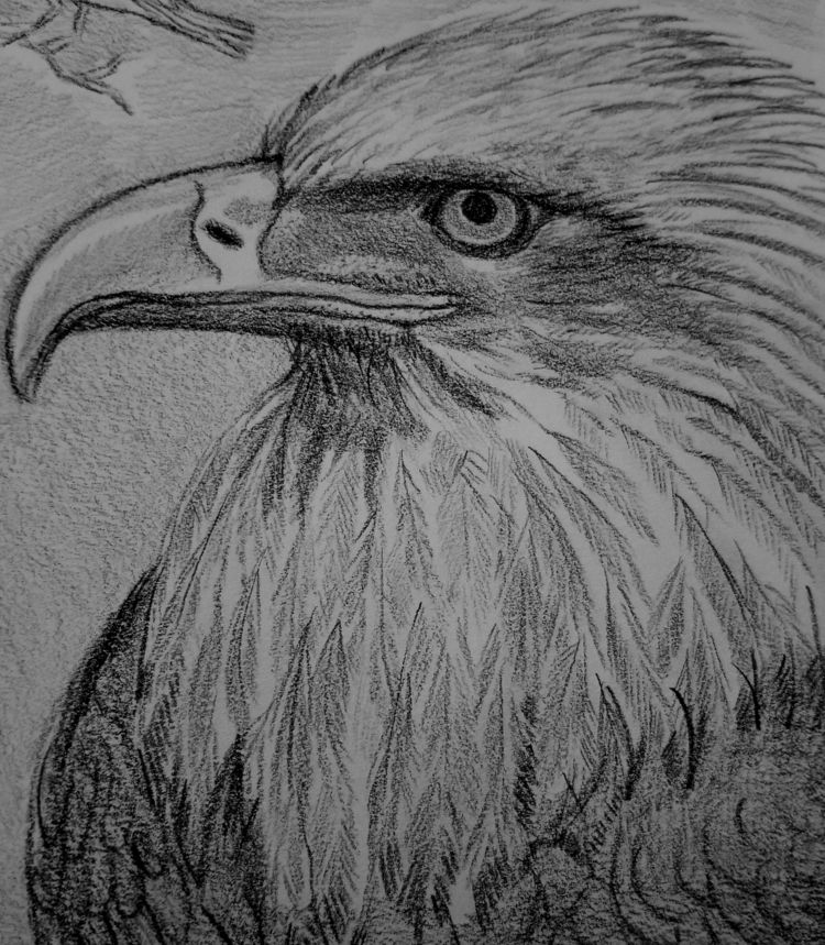 Doodle drawings: Pencil paper N - nora_ | ello