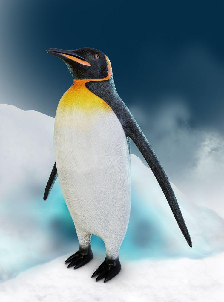 Emperor Penguin latest work - Blender3D - lidijam | ello