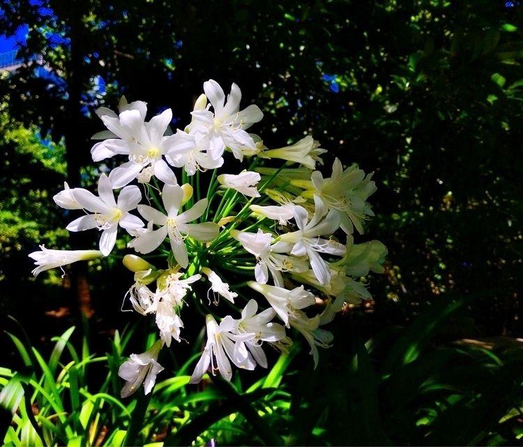 :sunny:️ - flowers, summer - mamimumemami | ello