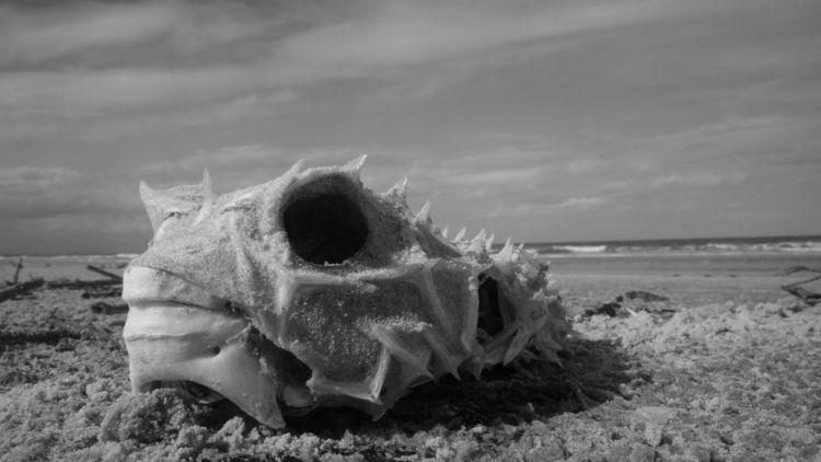 Leviatã - blackandwhitephotography - jsuassuna | ello