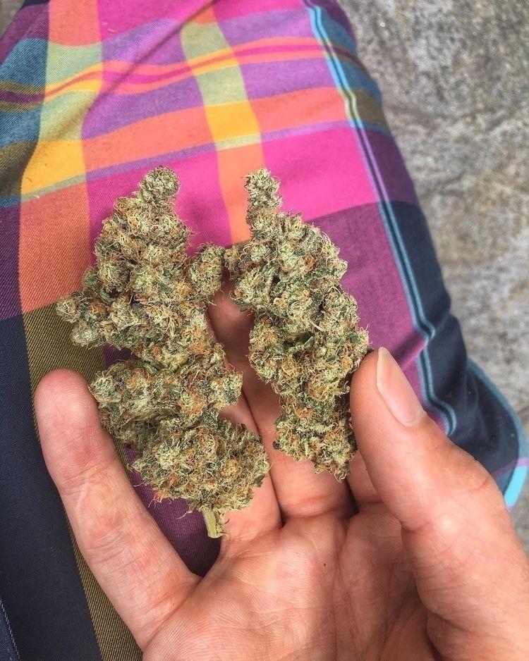 educate world cannabis drug cha - johnkane237 | ello