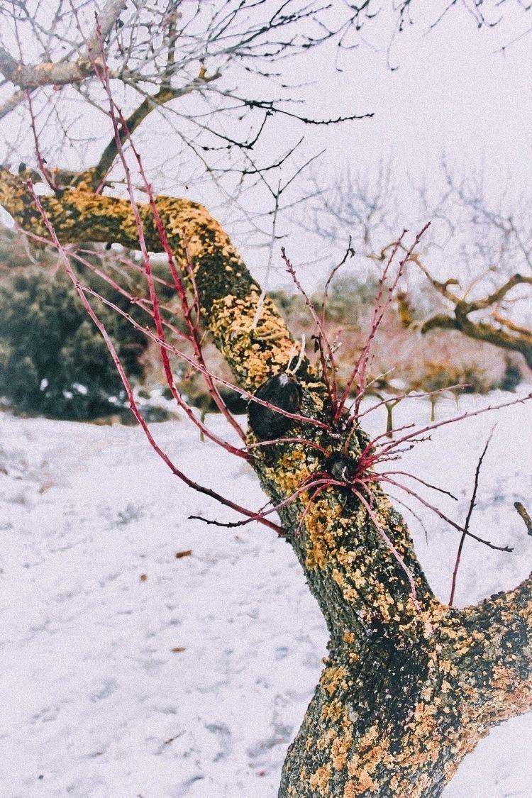 Love soft - tree, nature, photography - kyworld | ello