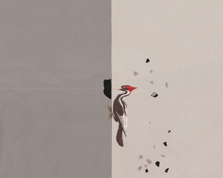 Woodpecker / Pica-pau - handmad - fitacola | ello