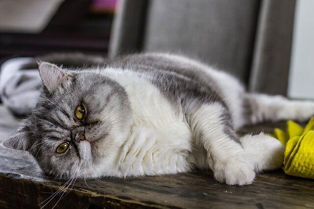 feline hypersensitivity goodbye - mariamhenderson | ello