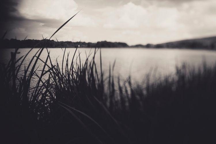 freelensing, lenswhacking, photography - olivier_mattia | ello