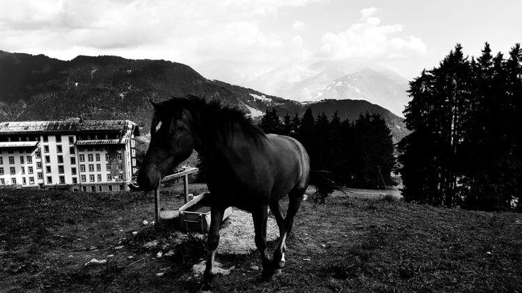photography, horse, animal - lorseau   ello