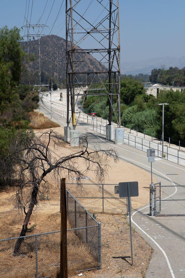 Dead Tree, Bike Path, LA River  - odouglas | ello