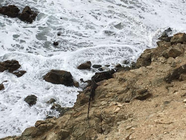 cliffs edge. iguana - sigmadefence   ello