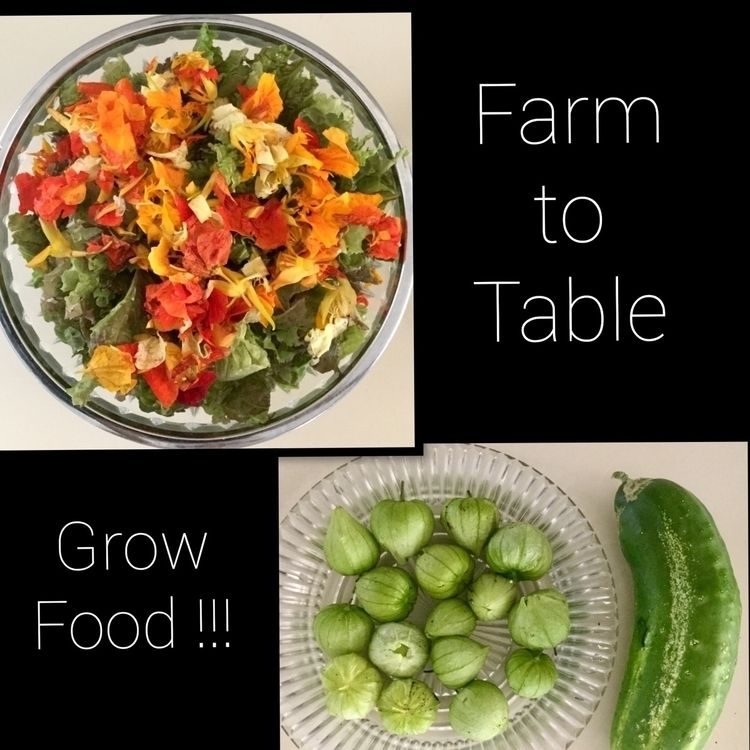 tastes food grow!!! work hard - growfood - laurabalducci | ello