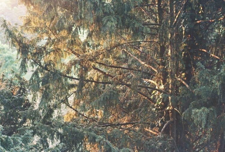 tree, Olympus µ, 35 mm - egonschwanz | ello