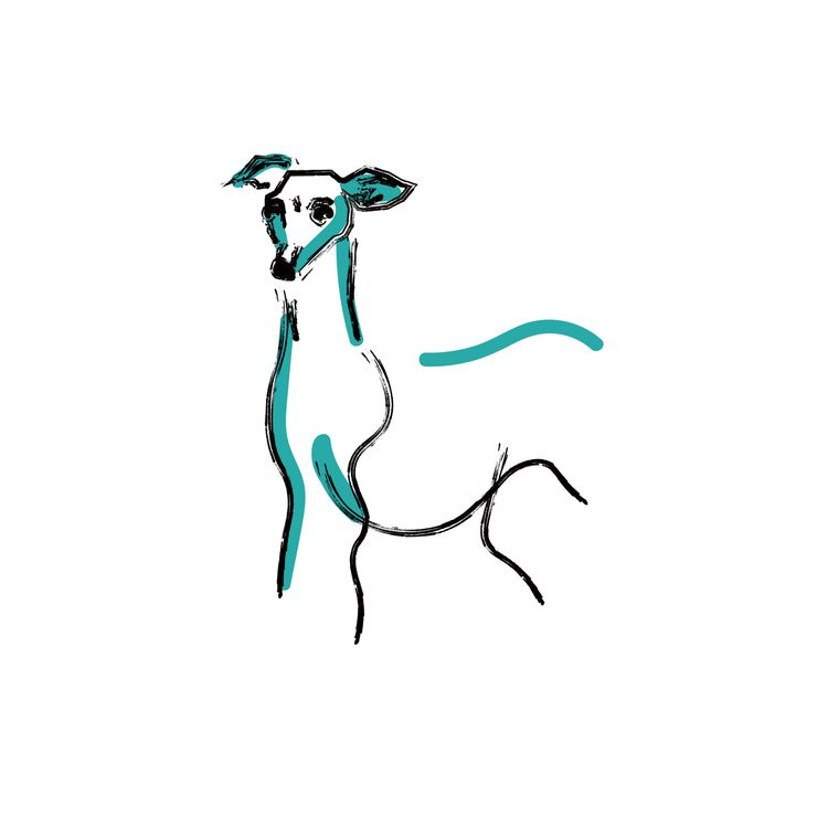 sweet lil greyhound  - illustration - serascout | ello