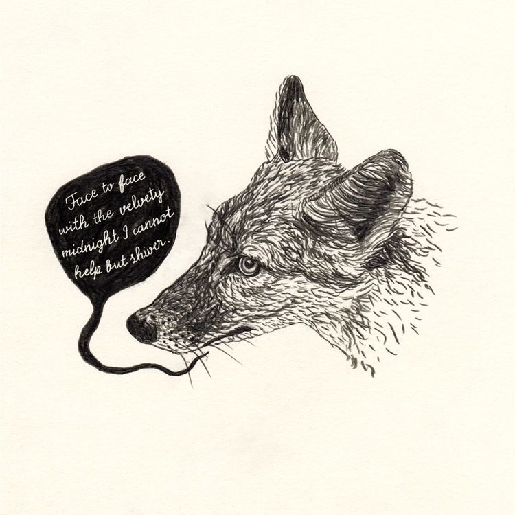 Coyote - illustration, art, drawing - janna_klaevers | ello