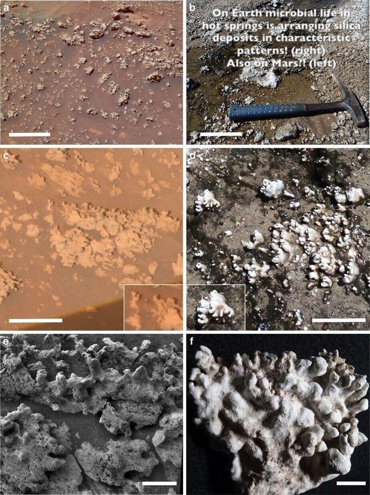 Signatures ancient microbial li - astrobederkesa | ello