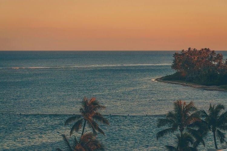Palm trees, beach, ocean, islan - fokality | ello