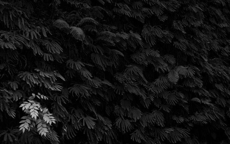 monochrome, blackandwhite, minimalist - bkleemann | ello
