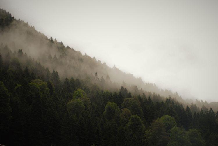 nature, minimal, minimalism, serenity - seyda | ello