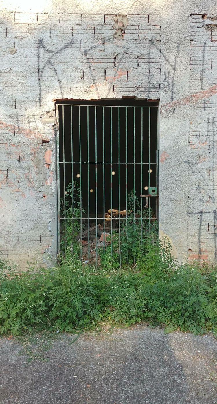 2017 / Door II - lgg6, lg, mobilephoto - anna-cheles | ello