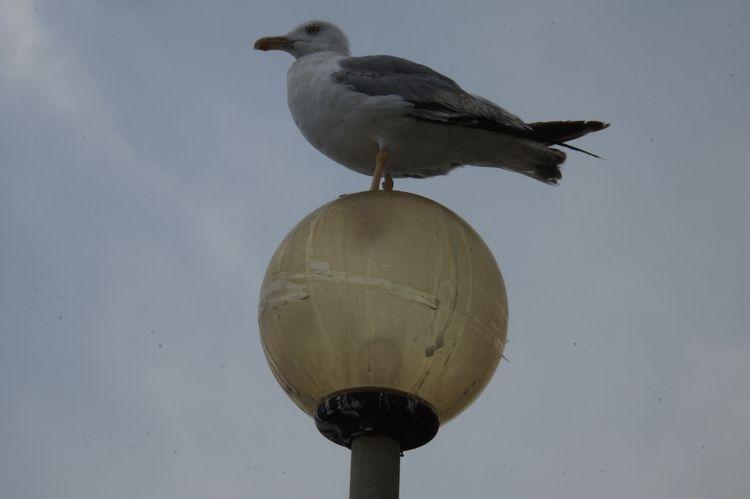 birds, venice - marco_legend | ello