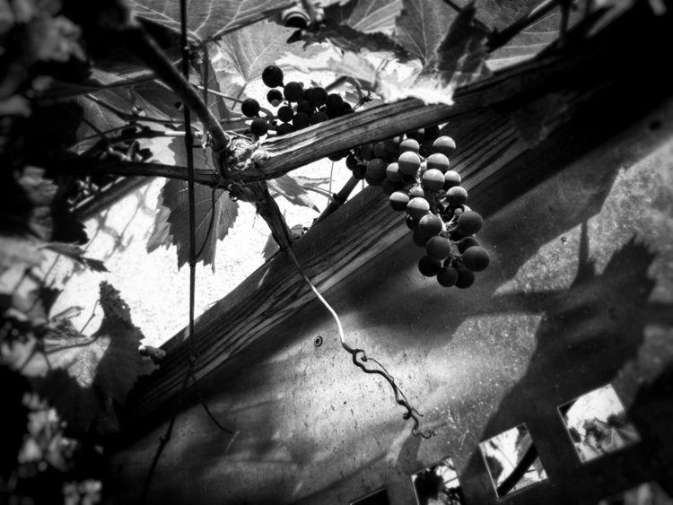 lucky day white photography - black - michiau | ello
