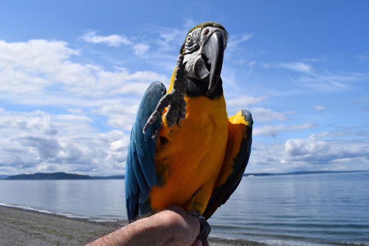 High weekend Blue Gold Macaw Ab - michaelostrogorsky | ello