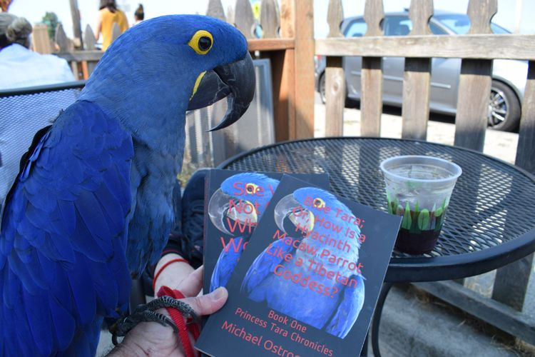 Life Beach, Parrot, Book, Coffe - michaelostrogorsky   ello