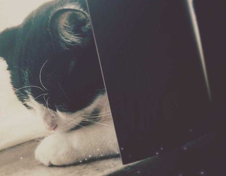 handsome kitteh - rhythmgirl   ello