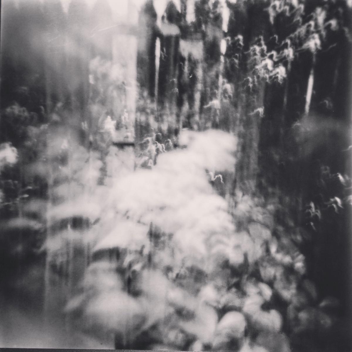 holga black white - 120, film, blackandwhite - x-files   ello