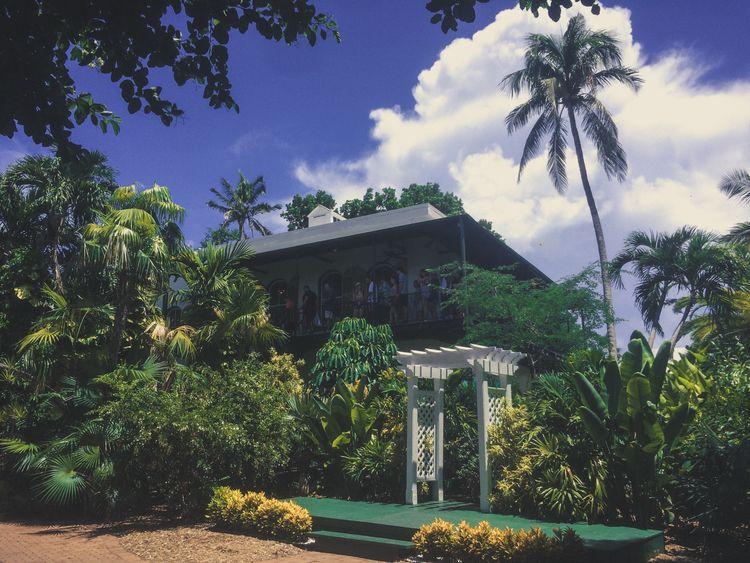 hemingway house: cats jungle - Hemingway - parkerbruer | ello